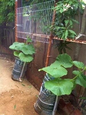 庭で放置されていたフェンスを活用